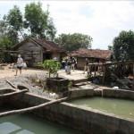 В прудовом рыборазводном хозяйстве