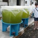 «Зелёная вода» - кормовая среда для мальков рыб