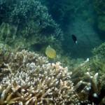 Знакомство с коралловыми рифами о. Мун