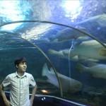В акеанариуме