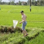 Лов на рисовой плантации