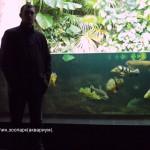 Аквариум зоопарка г. Берлин