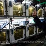 Тестовые аквариумы по разведению сигов. Рыбный завод г. Борн